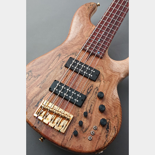 dragonfly 【48回無金利】CHB-5CTM -Spalted Maple Top 10mm L.Ash- 【当店独自仕様】【極杢】
