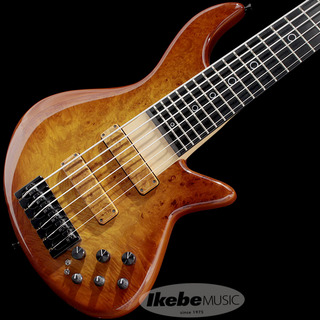 XoticXB-2/6st (Burl Maple Top / Honey Burst) 【USED】